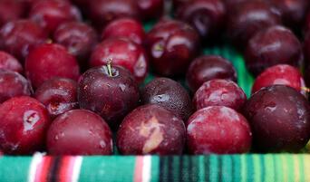 Santa Rosa plums from Windrose Farm at the Santa Monica Farmers Market.
